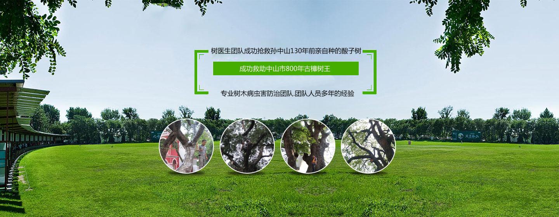 树木病虫害防治