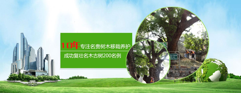 名贵树木养护